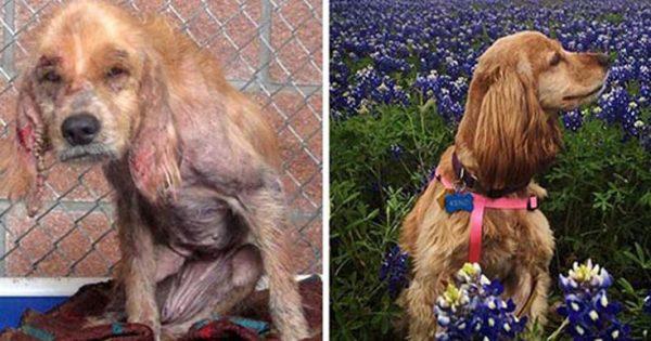 Φωτογραφίες που θα σας φτιάξουν τη διάθεση: Σκύλοι πριν και μετά τη διάσωση