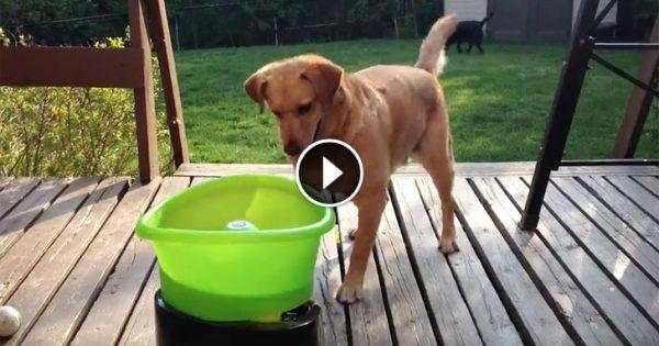 Σκύλος μπερδεύεται από το νέο του παιχνίδι. Αλλά όταν συνειδητοποιεί τι ακριβώς κάνει…