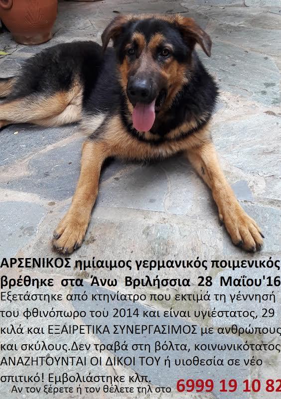 Χαρίζεται υιοθεσία σκύλων υιοθεσία αδέσποτων