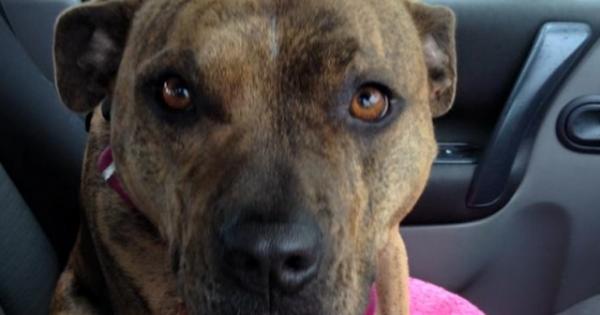 Φρέγια: Η σκυλίτσα που αγνόησαν 19.000 υποψήφιοι ιδιοκτήτες (Εικόνες)