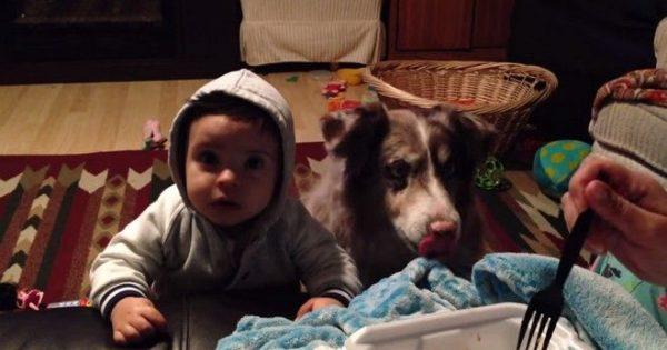 Σκύλος λέει «μαμά», πριν το μωρό!
