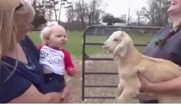 Τρελό βίντεο: Όταν μια κατσίκα και ένα μωρό «πιάνουν συζήτηση»…