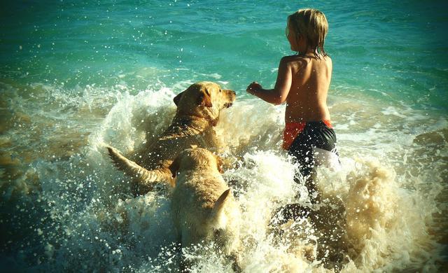 σκύλος και παραλία Σκύλος Παραλίες για σκύλους παραλίες
