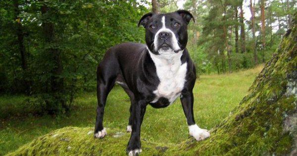 Τι θέλει να σου πει ο σκύλος σου; Καρέ-καρέ οι κινήσεις που σου λένε τι θέλει (εικόνες)