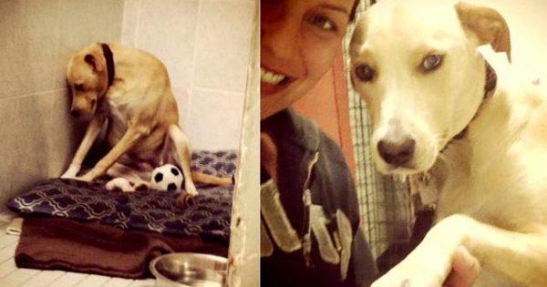 Συγκλονιστική φωτογραφία: Το πιο θλιμμένο σκυλί στον κόσμο [εικόνες]
