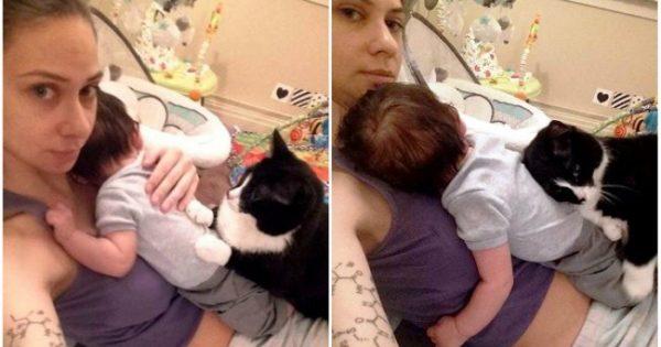 Αυτή η γάτα αγάπησε το μωρό πριν ακόμη γεννηθεί… Τώρα το προσέχει όλη την ώρα!