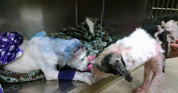 Σκύλος παρηγορεί τον φίλο του,γιατί είχε περάσει και αυτός τα ίδια!