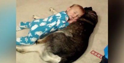 Το νυσταγμένο μωρό και ο σκύλος-μαξιλάρι