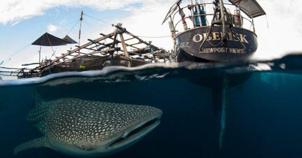 Εντυπωσιακές εικόνες: Εκεί που φαλαινοκαρχαρίες και άνθρωποι συνυπάρχουν αρμονικά