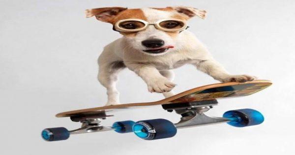 Δείτε τον σκύλο που βάζει τα «γυαλιά» ακόμη και σε … ανθρώπους στο skateboarding! [βίντεο]