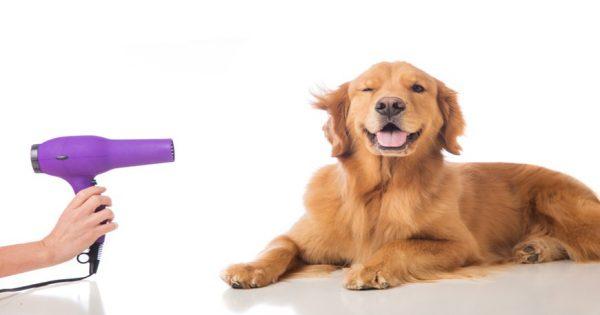 Χρήσιμα tips για να φροντίζετε ζώα σας με λιγότερα χρήματα