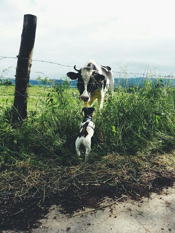 φωτογραφίες ζώων Μητέρες
