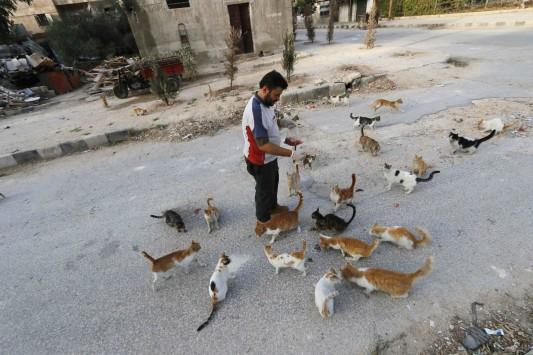 τζιχαντιστές αδέσποτα γατάκια