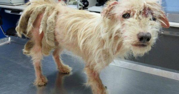 Έσωσαν την ηλικιωμένη σκυλίτσα που περιφερόταν εξαθλιωμένη σε δασώδη περιοχή της Καρδίτσας