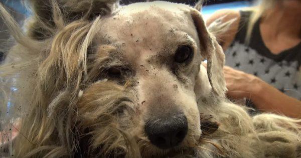 Ήταν χτυπημένος και έτρεμε τους ανθρώπους. Σήμερα, δεν θα πιστεύετε ότι είναι ο ίδιος σκύλος!