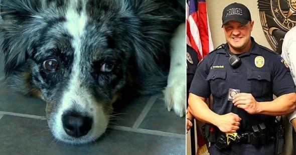 Αστυνομικός ηρεμεί σκύλο που τον δάγκωσε