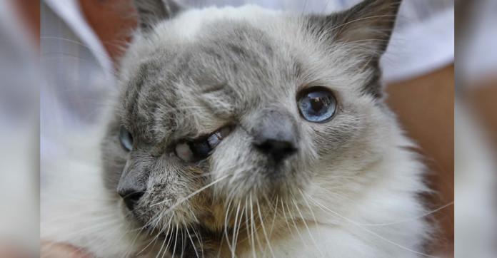 γάτα με δύο πρόσωπα Γάτα