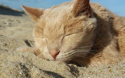 Γυναίκα σώζει υπέργηρο γάτο για να του προσφέρει αγάπη και ασφάλεια στο τέλος της ζωής του