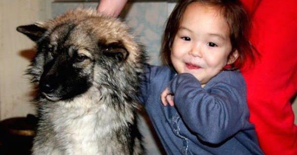 Νόμιζε πως το αγνοούμενο κοριτσάκι είναι νεκρό. 11 ημέρες αργότερα, αποφασίζει να ακολουθήσει το σκυλί μέσα στο δάσος…