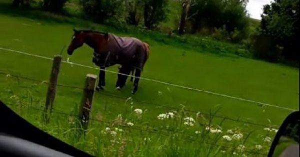 Το άλογο μεταλάς (βίντεο)