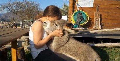 Αγκαλιές με ένα γαϊδουράκι