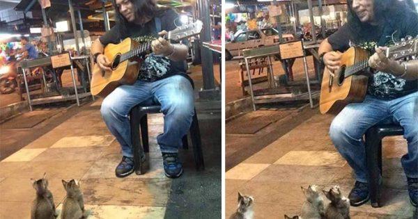 4 γατάκια σταμάτησαν να ακούσουν τον μουσικό του δρόμου που όλοι αγνοούσαν