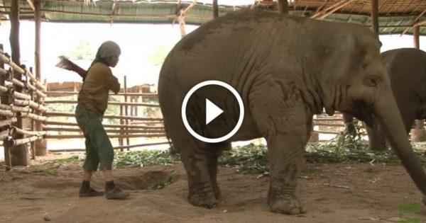 Ετοιμάζεται να «χτυπήσει» τον ελέφαντα από πίσω. Δείτε την αντίδραση του ελέφαντα και θα μείνετε άφωνοι!