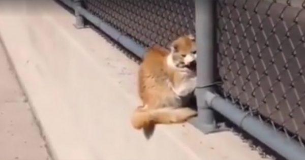Παρατήρησε μια ακίνητη γάτα στην άκρη του φράχτη. Μόλις πλησίασε πιο κοντά, αυτό που είδε τον έκανε να παγώσει!