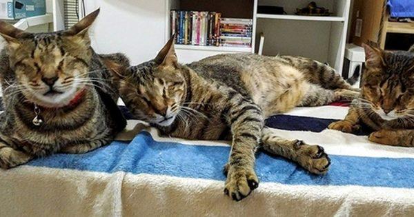 Οι τρεις τυφλές γάτες που δεν ήθελε κανείς και η ιστορία τους