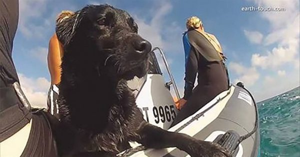 Μόλις δείτε τι κάνει αυτό το σκυλάκι με τα δελφίνια, θα τρελαθείτε!