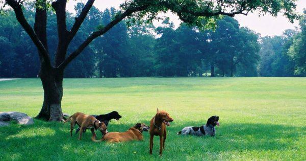 Βόλτα με τον σκύλο – 5 πράγματα που πρέπει να προσέχετε!