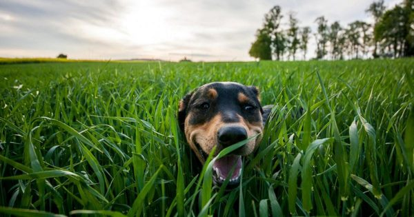 Μάθε τι είναι το Καλαζάρ – Σώσε τη ζωή του σκύλου σου!