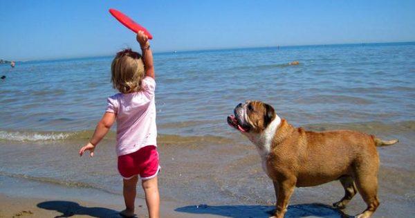 Μία παραλία μόνο για… σκύλους! Υπάρχουν και στη χώρα μας (βίντεο)