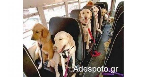 Ελεύθερη η μεταφορά ζώων με ΚΤΕΛ – Υποχρεωτικά εντός του χώρου επιβατών