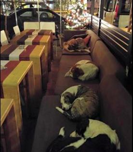 Αυτή η καφετέρια κάνει κάτι μοναδικό! Κάθε βράδυ, ανοίγει τις πόρτες της σε αδέσποτους σκύλους, αντί να τους διώχνει!