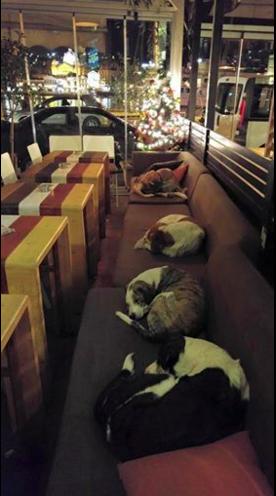 καφετέρια αδέσποτοι σκύλοι