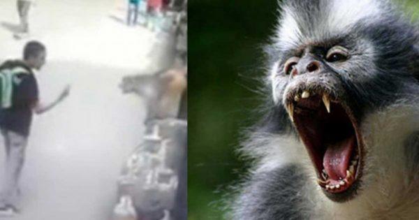 Ένα αγόρι έδειξε το μεσαίο δάκτυλο σε πίθηκο. Δείτε την εξωπραγματική αντίδραση του πιθήκου!