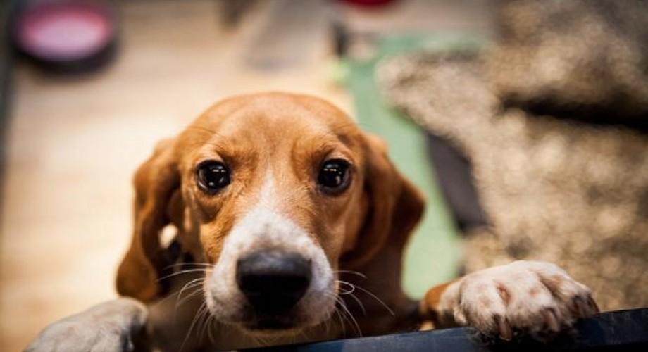 φιλόζωοι κακοποίηση σκύλων