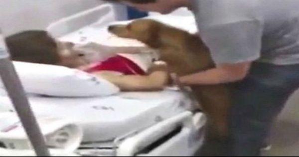 Το βίντεο που έκανε τους πάντες να δακρύσουν! Σκύλος επισκέπτεται την ιδιοκτήτριά του λίγο πριν «φύγει»