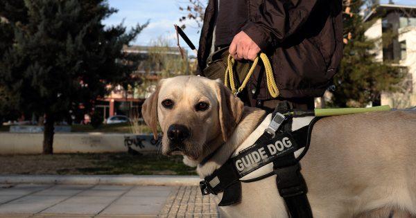 Αφανείς ήρωες: Με τα μάτια δεμένα στην Αθήνα κι έναν Σκύλο για Οδηγό