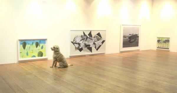 Κι όμως υπάρχει! Έκθεση σύγχρονης τέχνης για… σκύλους! [video]