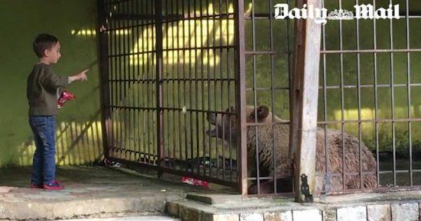 Η μοναξιά και η δυστυχία της αρκούδας στο κλουβί (βίντεο)