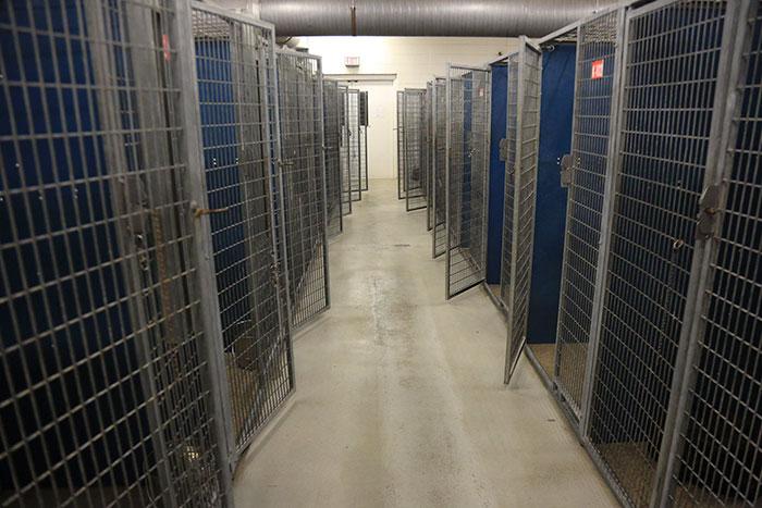 υιοθεσία αδέσποτων εγκαταλελειμμένα ζώα