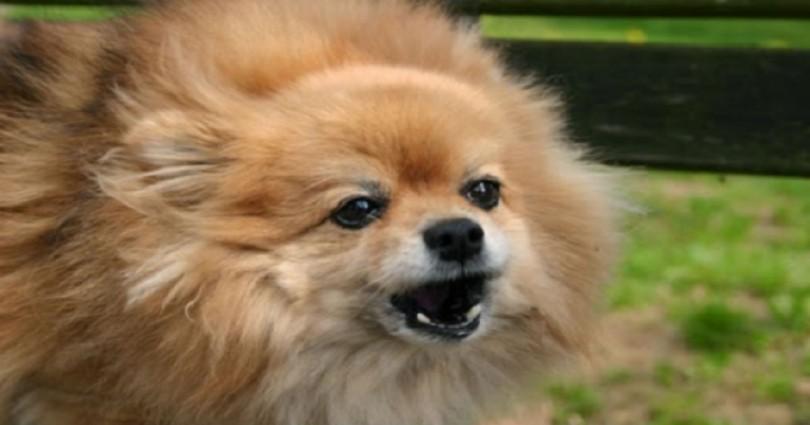 Σκύλος γάβγισμα