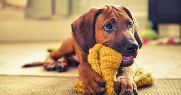 Aυτές είναι ο ομορφότερες φωτογραφίες σκύλων του Kennel Club 2016