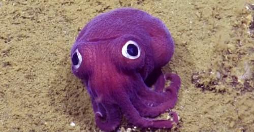 1047401_purple-naut_1024_1