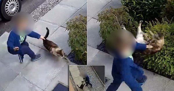 Η σοκαριστική στιγμή που ένα αγόρι χτυπάει και κλοτσάει μία γάτα, χωρίς κανέναν λόγο, θα σας κάνει να εξοργιστείτε!