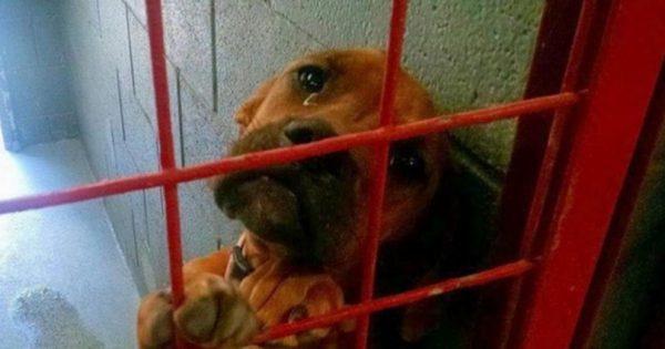 Δημοσίευσε την φωτογραφία αυτού του λυπημένου σκύλου στο Facebook. Λίγες μέρες μετά, άλλαξαν τα πάντα!