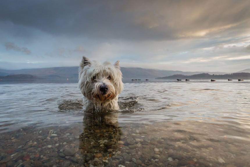 φωτογραφίες σκύλων Kennel Club 2016