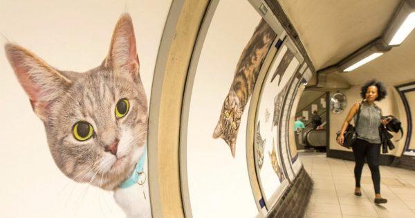 Όλες οι διαφημίσεις στο μετρό του Λονδίνου έχουν αντικατασταθεί από εικόνες με γάτες